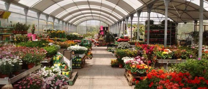 Centros de jardineria en madrid stunning curso de - Garden center madrid ...