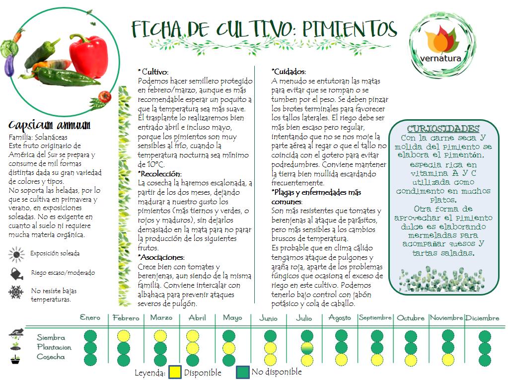Ficha de cultivo pimiento vernatura for Cultivo pimiento huerto urbano