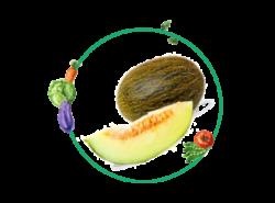 Ficha cultivo melon