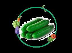 Ficha cultivo pepinos