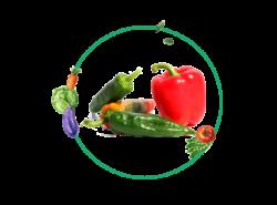 Ficha cultivo pimientos